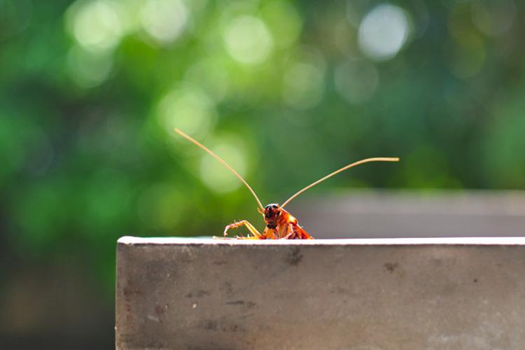 Κάντε απολυμάνσεις και απομακρύνετε κατσαρίδες από το χώρο σας