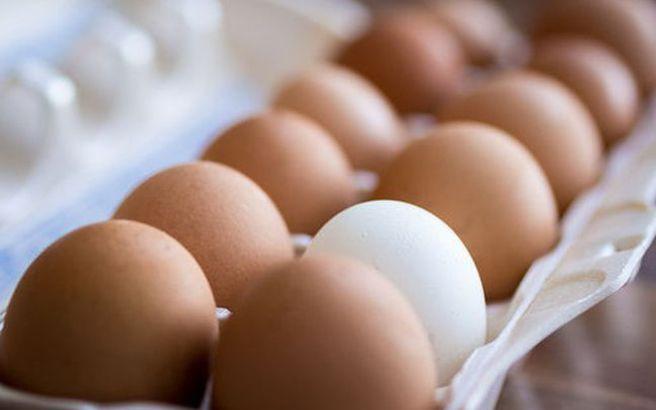 egg.medium 1