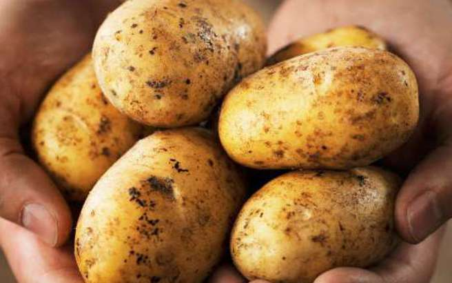 patata.medium