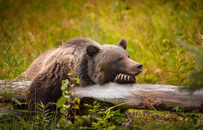 Εθνικό Πάρκο Μπανφ, ένα εντυπωσιακό σκηνικό στην επαρχία Αλμπέρτα του Καναδά