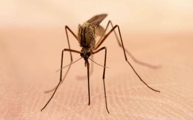 64682707 mosquito thinkstock624 1
