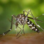 mosquito 2 1