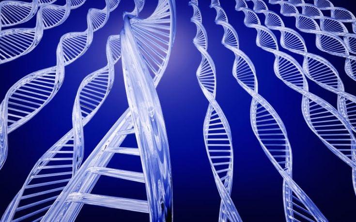 genes determines 1
