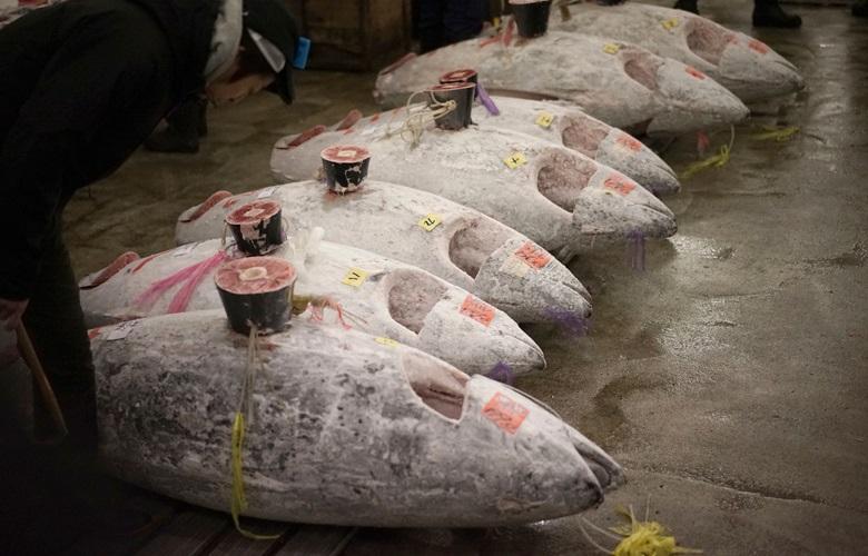 Το πιο ακριβό ψάρι που πουλήθηκε ποτέ