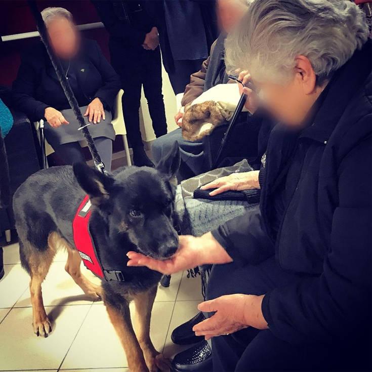Σκύλοι βοηθοί στην υπηρεσία ατόμων με άνοια ή Alzheimer