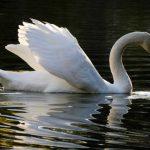 Βόλτα στη λίμνη Μπελέτσι, στην Ιπποκράτειο Πολιτεία