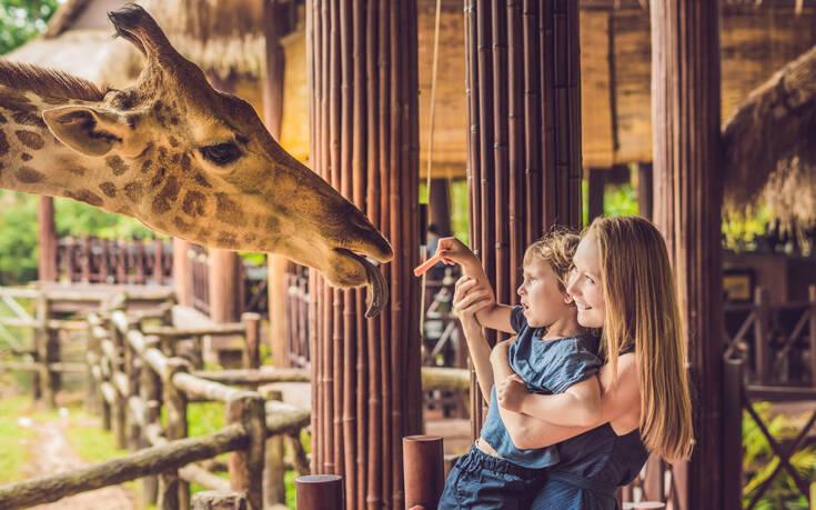Κάντε μια εικονική βόλτα με τα παιδιά σας σε ζωολογικό κήπο και ενυδρείο