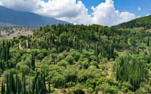 Το δάσος στην Κεφαλονιά που έχει κάτι μοναδικό σε όλο τον κόσμο – Newsbeast