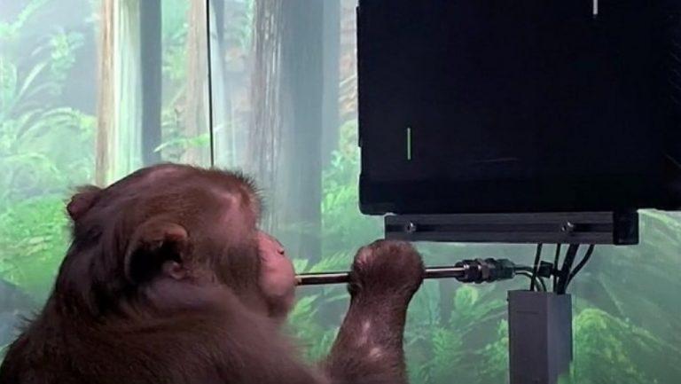 Neuralink: Η εταιρία του Ίλον Μάσκ παρουσίασε μαϊμού να παίζει video game μέσω νου της