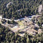 Το ελατοδάσος δίπλα στην Αθήνα που αποτελεί μία αληθινή όαση – News.gr